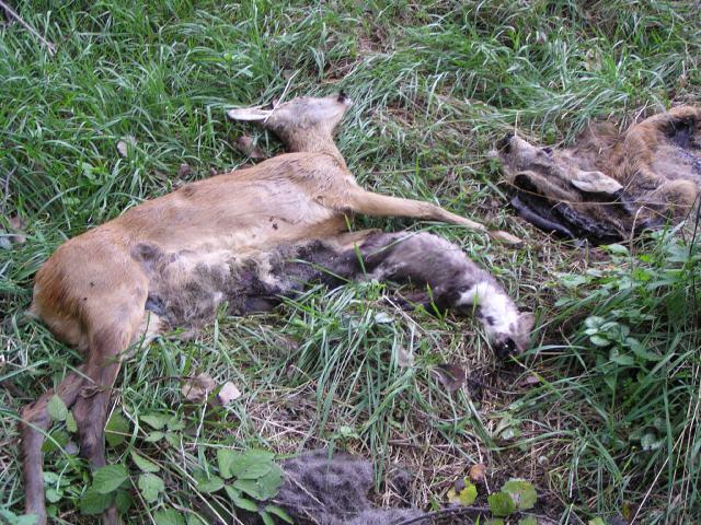 Initiative zur abschaffung der jagd